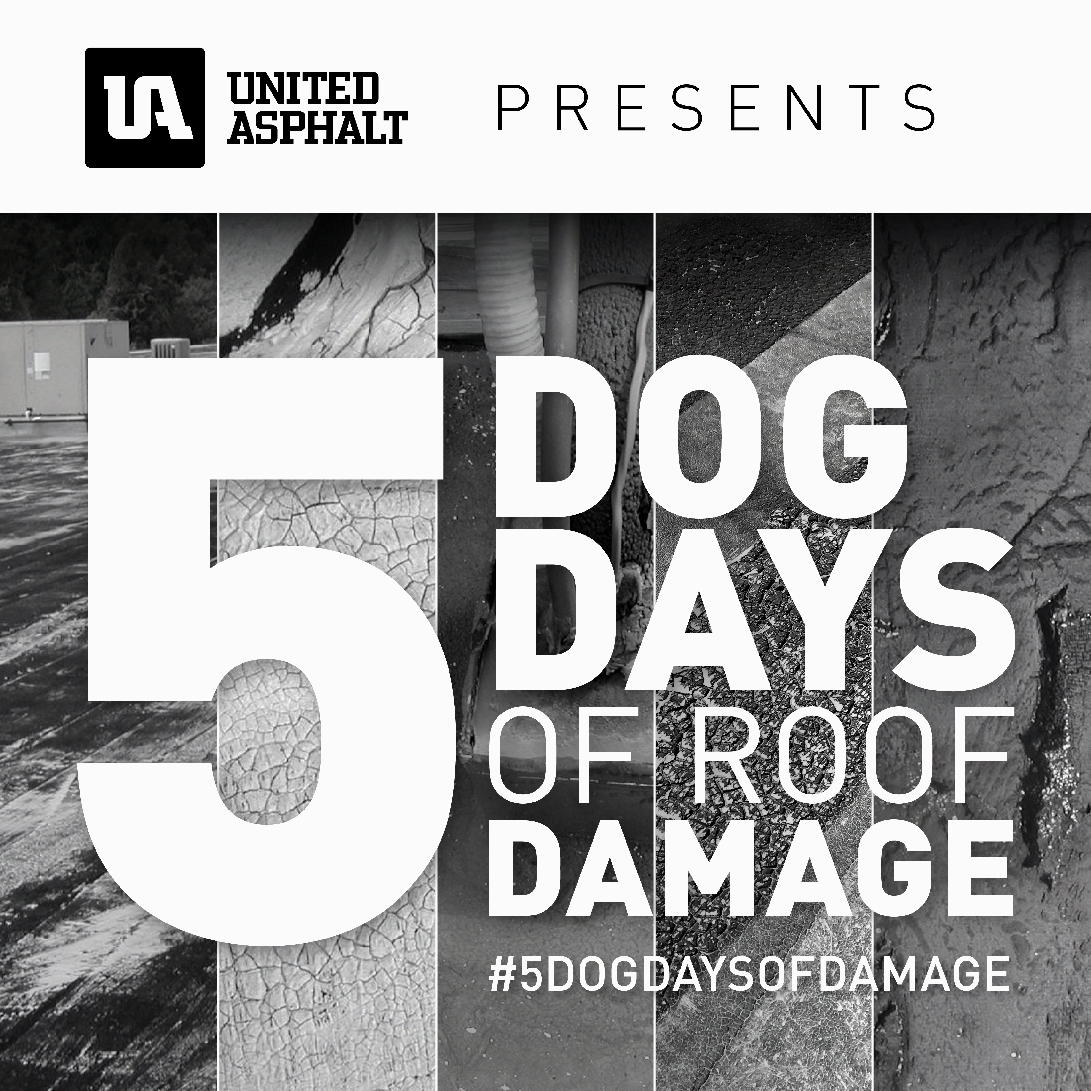 5 Dog Days of Roof Damage 1st Day Post